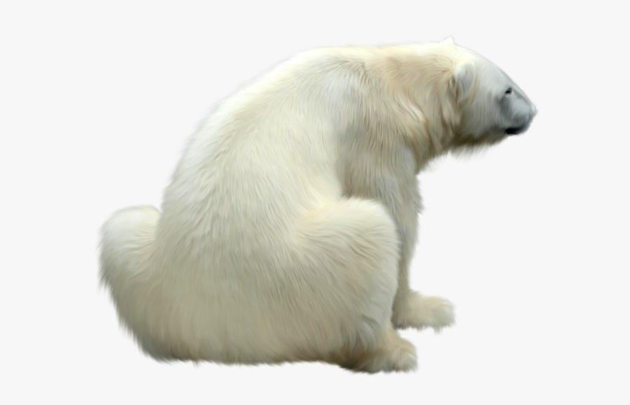 Polar Bear Png - Polar Bear Back, Transparent Clipart