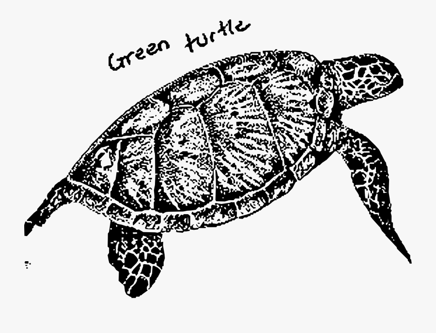 Green Turtle Clip Arts - Turtles Green Turtle Black And White, Transparent Clipart