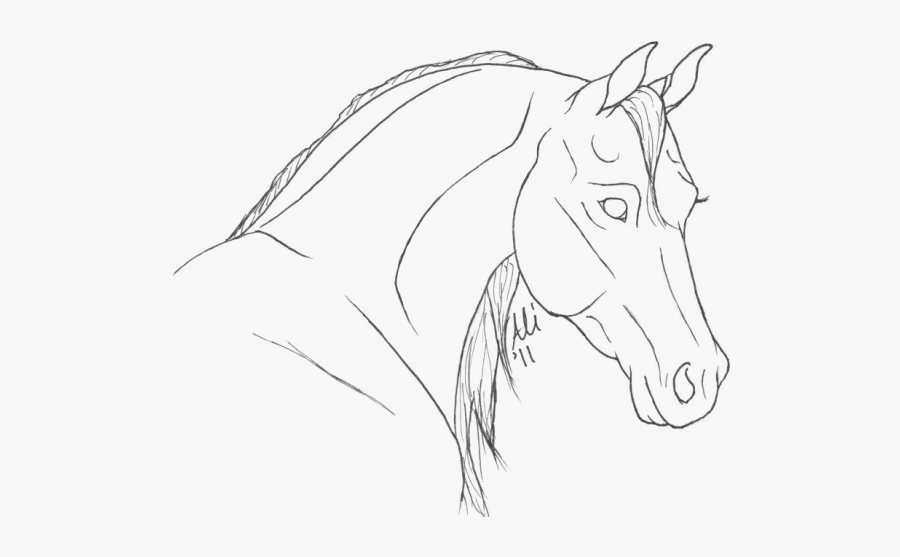 Coloring Pages Of Arabian Horse Heads, Transparent Clipart