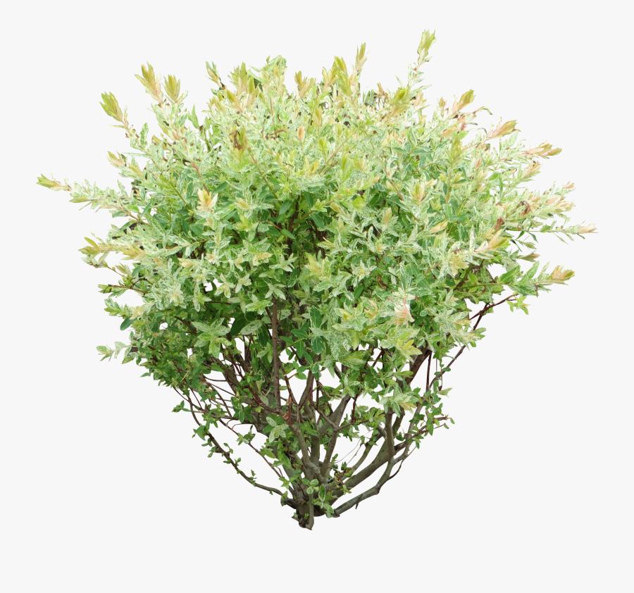 Rose Bush Clipart Green Bush - Bush Png, Transparent Clipart