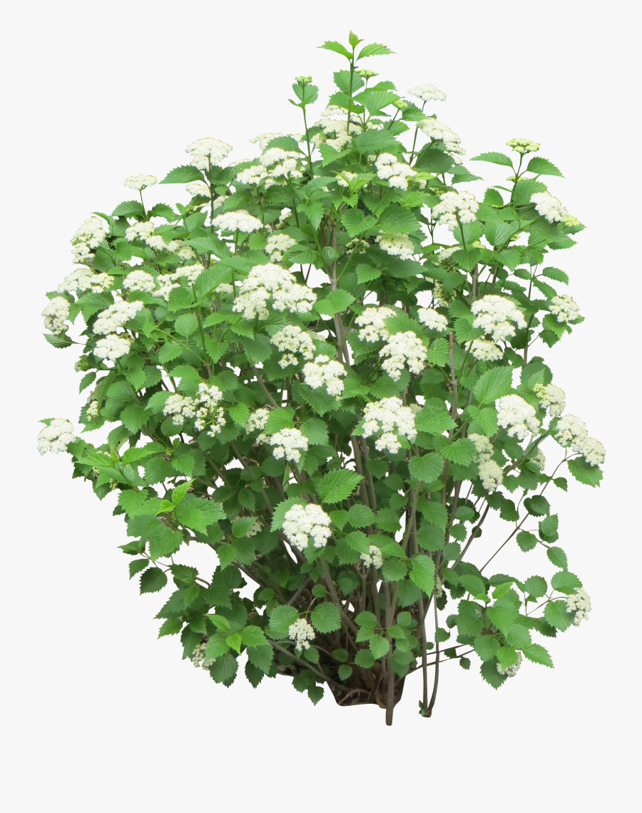Bush Clipart Drawn - White Flower Bush Png, Transparent Clipart