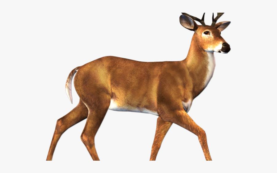 Deer Animal Png, Transparent Clipart
