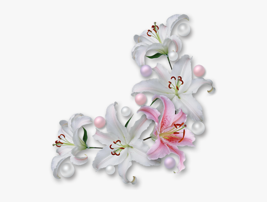 Lily Transparent Border - White Flower Corner Png, Transparent Clipart
