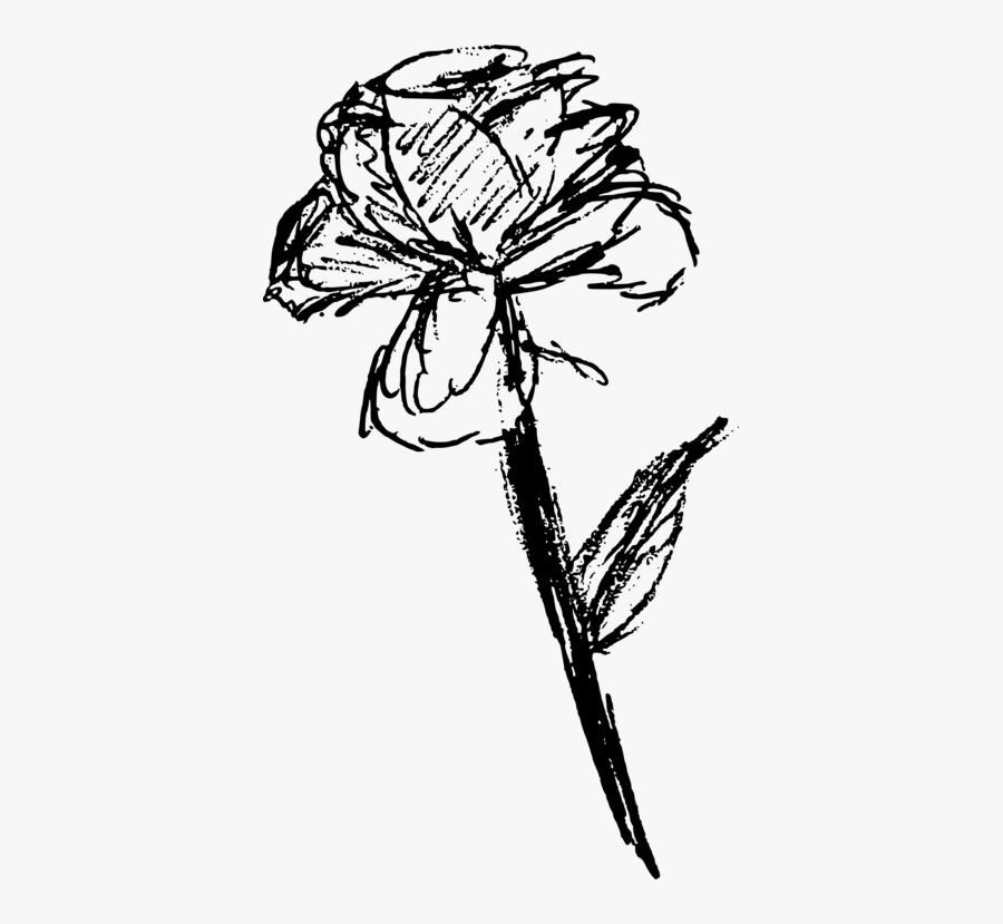 Botany,plant,flower - Free Rose Sketch Png, Transparent Clipart