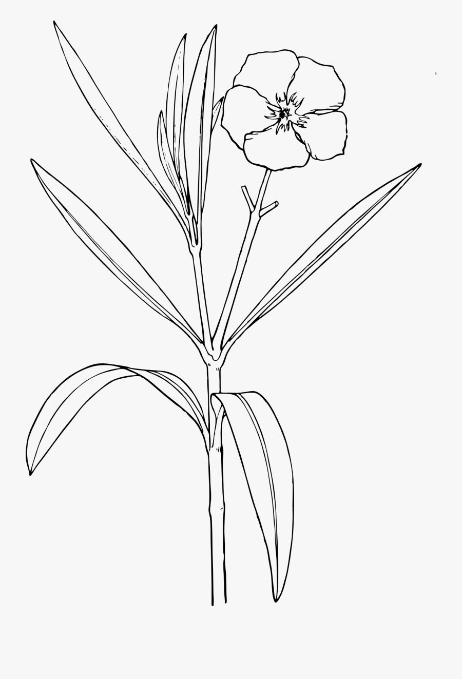 Oleander And Design Bush - Red Kaner Flower Drawing, Transparent Clipart