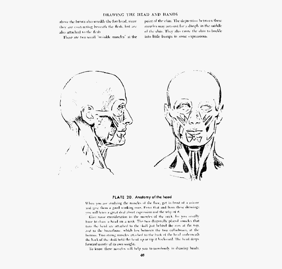 Andrew Loomis Drawing The Head And Hands 41 - Andrew Loomis Anatomy Drawing, Transparent Clipart