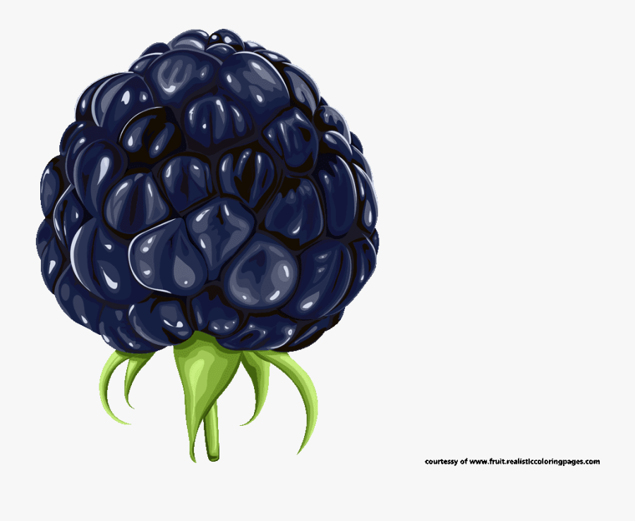 Blackberry Fruit Clipart Royalty Free - Blackberry Fruit Clipart, Transparent Clipart
