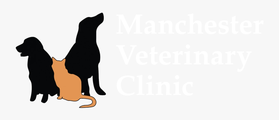 Trusted Vets For Your Pets - Cat Dog Cartoon Vet, Transparent Clipart