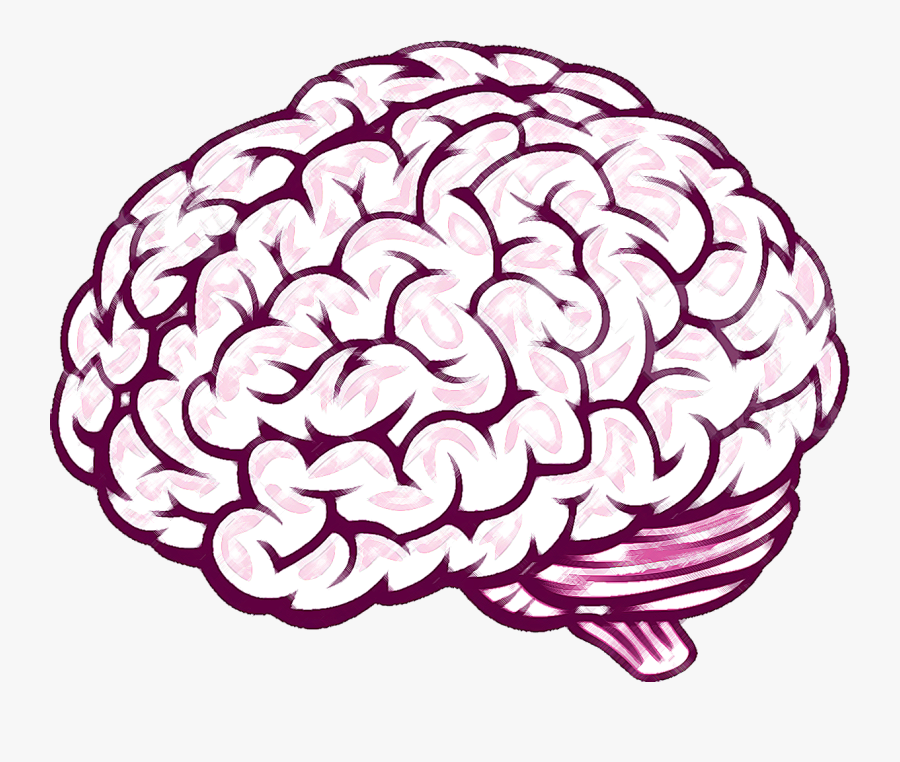 Brain Thinking Clipart For Kids Free Cliparts Transparent - Drawing Of Brain, Transparent Clipart