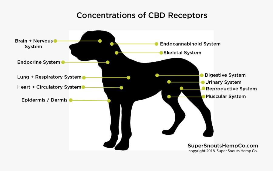 Cbd Receptor Dog - Ancient Dog Breeds, Transparent Clipart