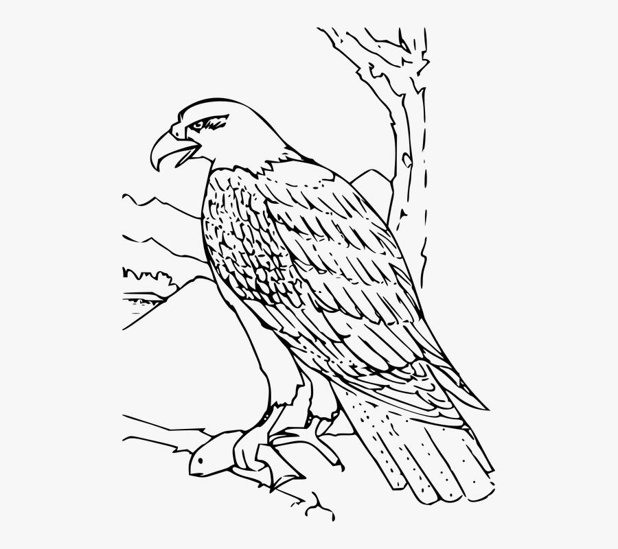 Eagle, Feather, Wing, Wildlife, Majestic, America - Hawk Clipart Black And White, Transparent Clipart
