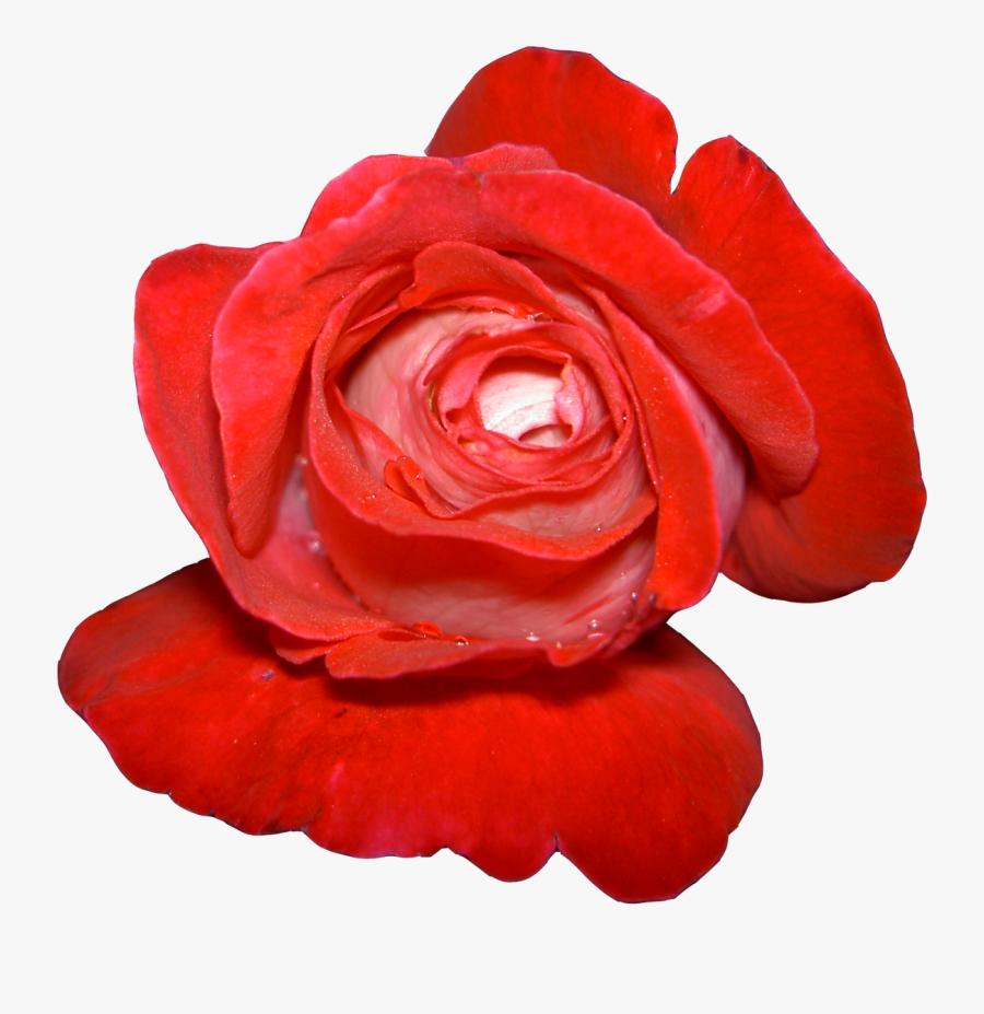 Cartoon Flower Clip Art - Flowers, Transparent Clipart
