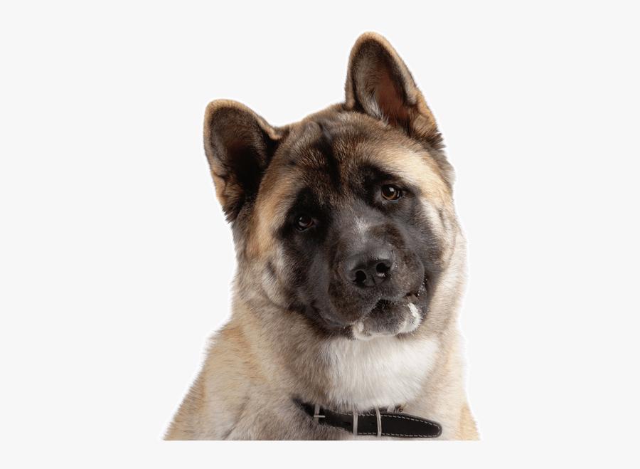Clip Art Akita Puppies Dogs Search - American Akita Price, Transparent Clipart