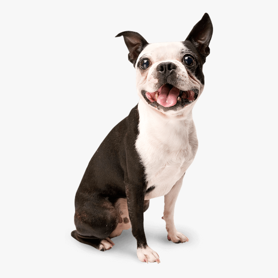 Happy Dog Png - Isolated Dog, Transparent Clipart