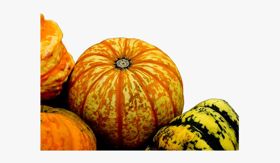 #ftestickers #autumn #fall #nature #pumpkins #gourds - Gourd, Transparent Clipart