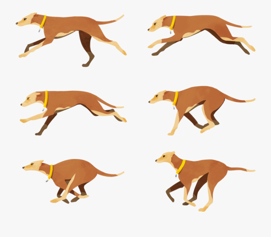 Italian Greyhound Dog Breed Crossbreed Clip Art - Dog Catches Something, Transparent Clipart