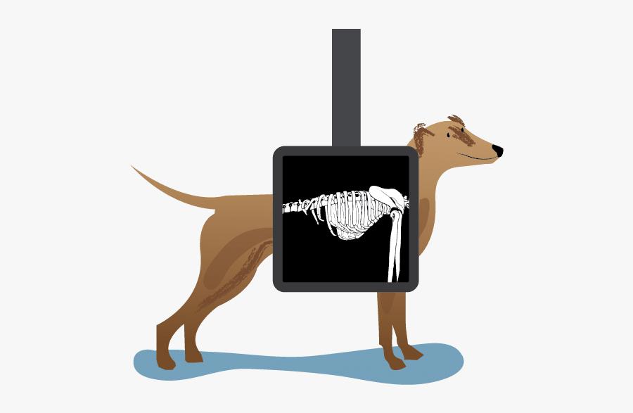 Rolda Uk Responsibly Save - X Ray Clipart Animal, Transparent Clipart
