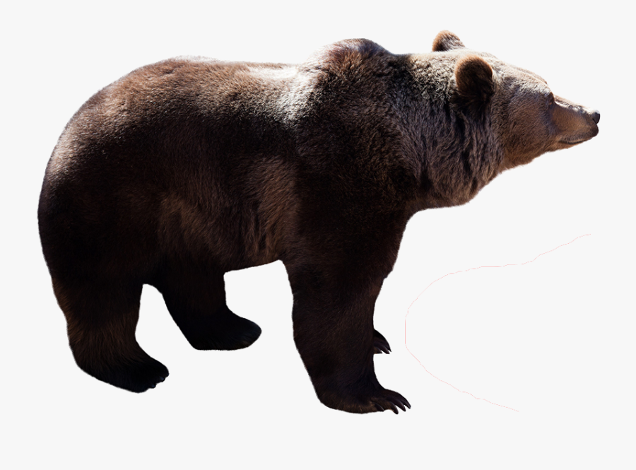 Profile View Of A Bear, Transparent Clipart