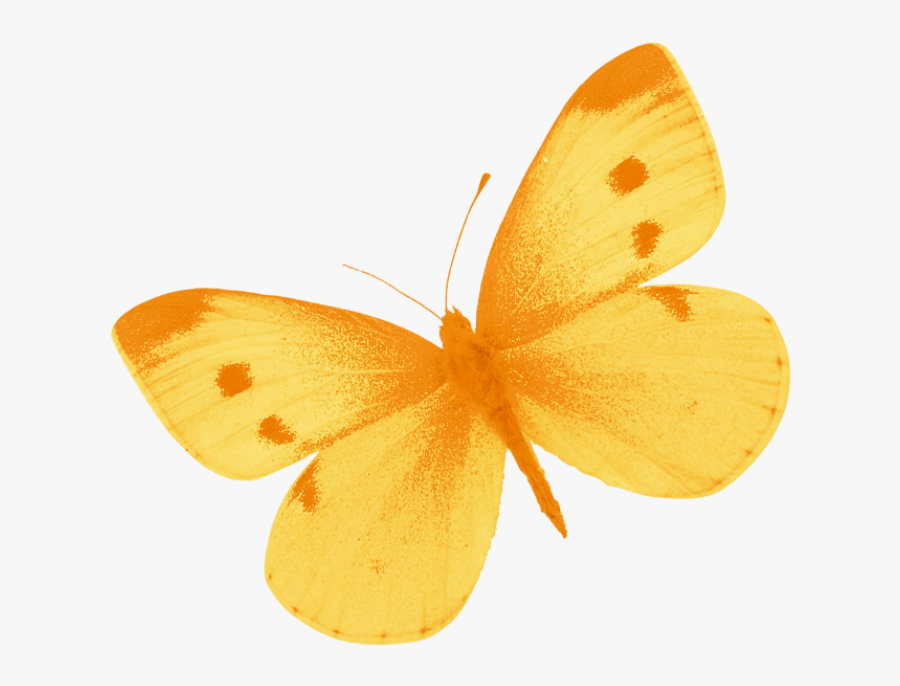 Png Of A Yellow Butterfly - Free Images Yellow Butterfly, Transparent Clipart