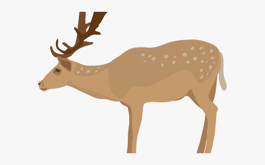 Deer Clipart Transparent Background, Transparent Clipart