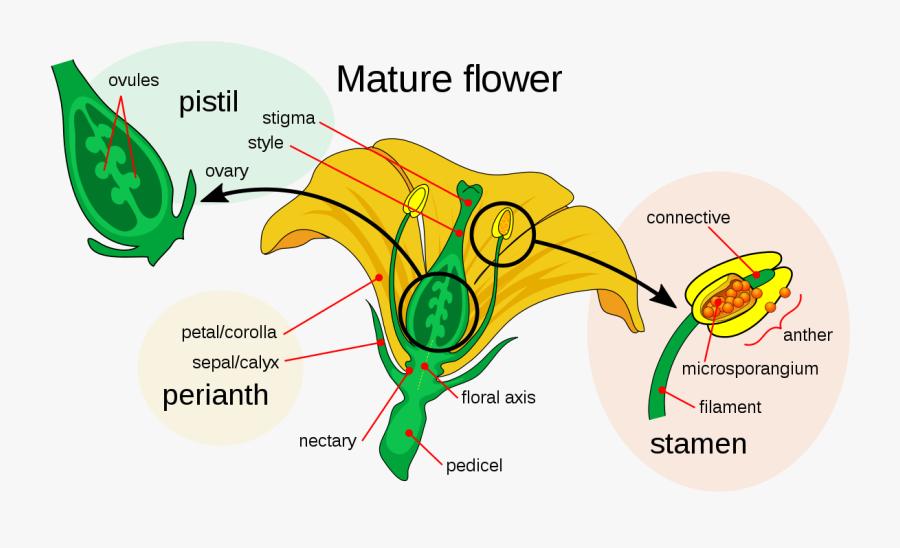 Diagram Of Pumpkin Flower Wiring Diagram Nllabel A