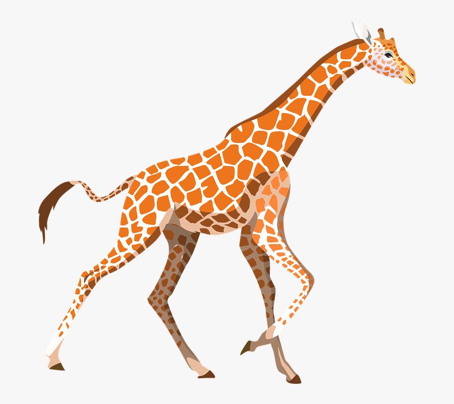 Zoo Animals Clip Art At Clker - Giraffe Png, Transparent Clipart