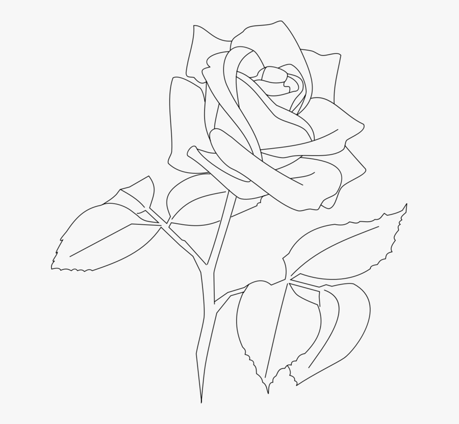 Art,symmetry,monochrome Photography - White Rose Outline Png, Transparent Clipart