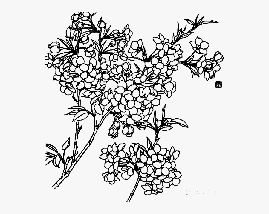 Clipart Royalty Free Stock Blackberry Drawing Flower - Flowers Line Drawing Png, Transparent Clipart