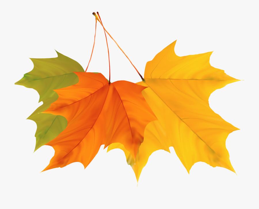 Maple Leaf Autumn - Autumn Leaves Vector Png, Transparent Clipart