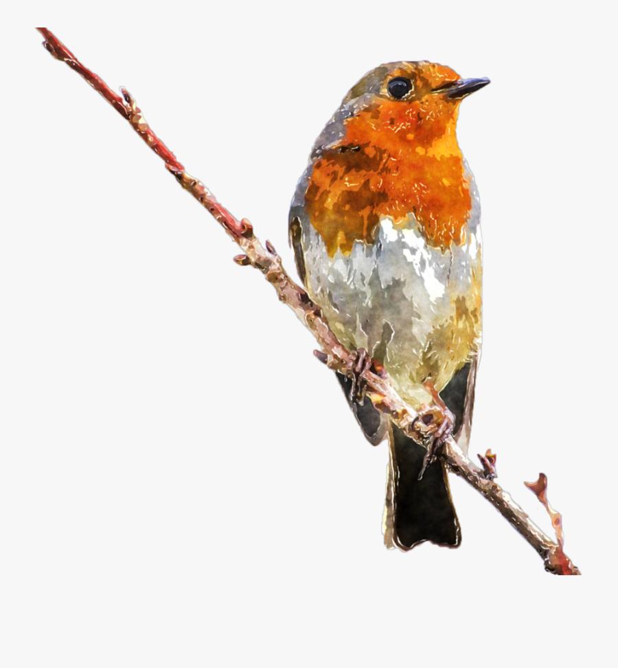 Clipart Royalty Free Stock Watercolor Bird Clipart - Royalty Free Images Birds, Transparent Clipart