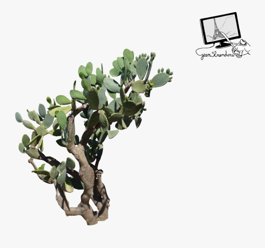 Fig Tree Png, Transparent Clipart