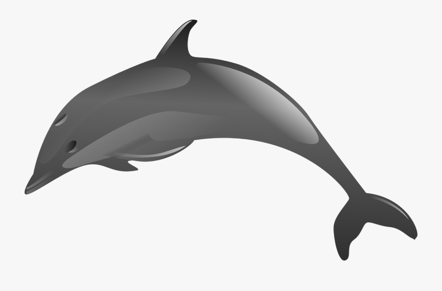 3 Jumping Dolphin Clipart - Animales Acuaticos En Png, Transparent Clipart