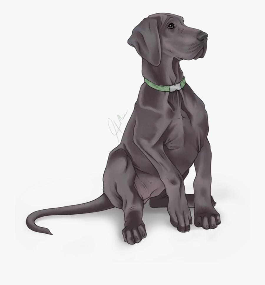 Weimaraner Great Dane Labrador Retriever Dog Breed - Great Dane Transparent Png, Transparent Clipart