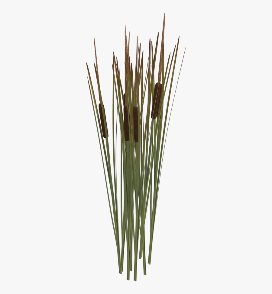 Reeds Png Transparent Reeds Images Reed Png Free Transparent Clipart Clipartkey