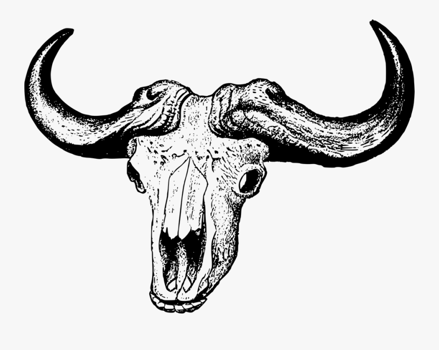 Africa, Bovine, Buffalo, Skull - African Buffalo Skull Drawing, Transparent Clipart