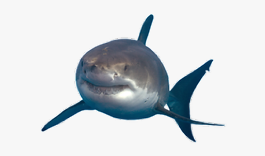 Great White Shark Portable Network Graphics Image Drawing - Great White Shark Png, Transparent Clipart