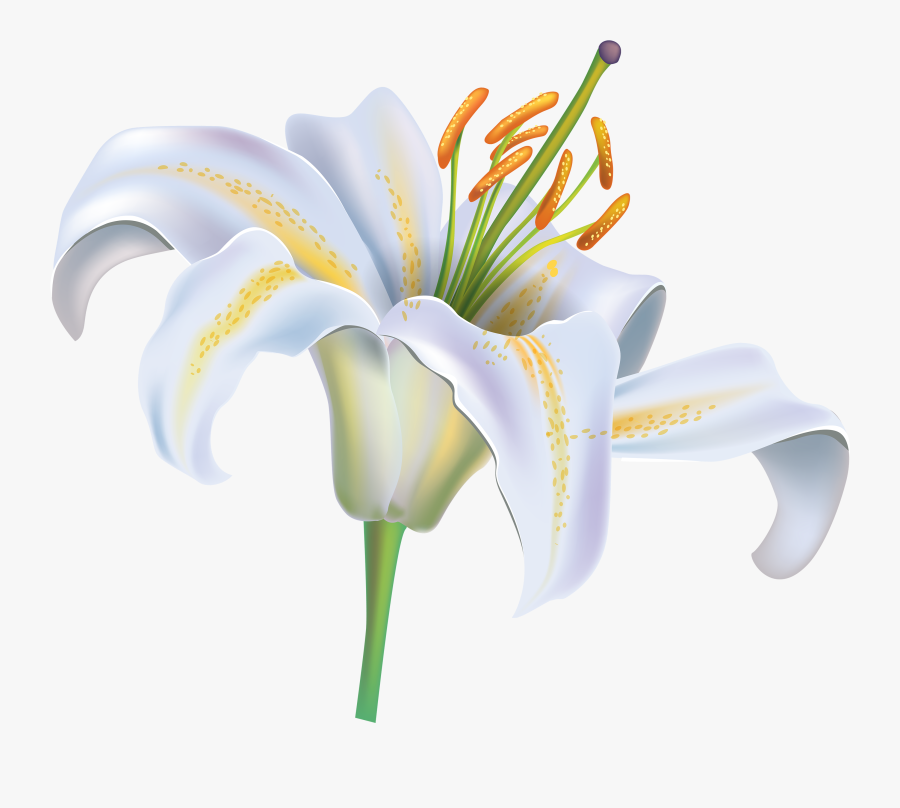 Flower Png Image Best - Clipart White Lily Flower, Transparent Clipart