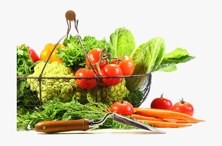 Organic Food Vegetable Fruit Clip Art - Lechuga, Transparent Clipart