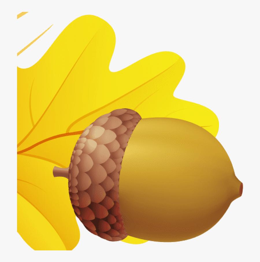 Acorn - Листочки Осенние На Прозрачном Фоне, Transparent Clipart