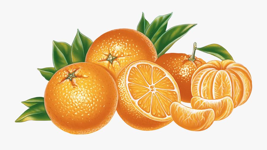 Orange Png Image, Free Download - Oranges Transparent Background, Transparent Clipart