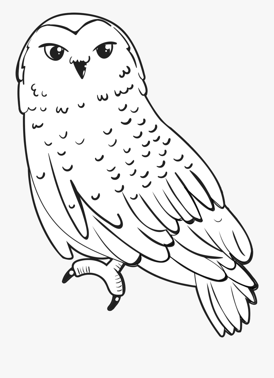 How to Draw a Snowy Owl Step by Step | Arctic Animals Coloring Pages for  Kids | Owl Coloring Page - YouTube | 1241x900