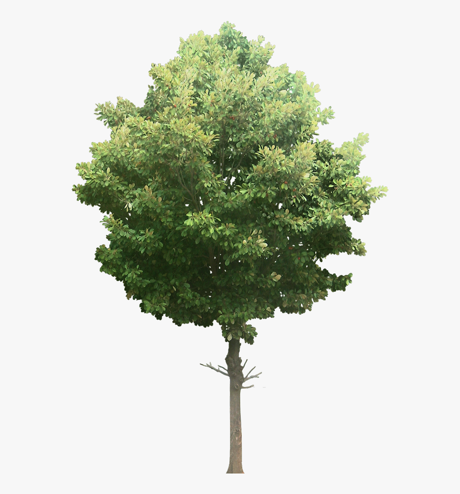 Transparent Watercolor Plant Png - Transparent Background Tree Png, Transparent Clipart