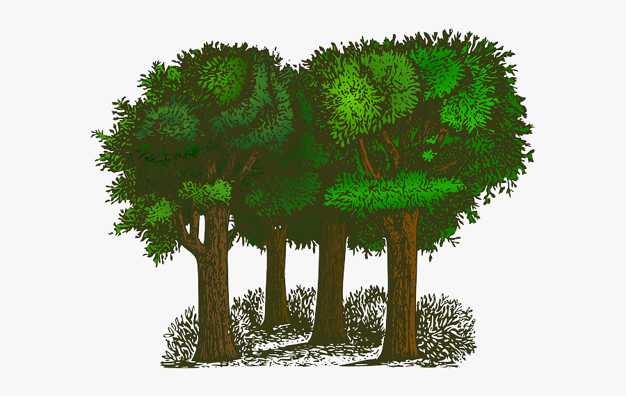 Planting Clipart Forest Plant - Balance Of Oxygen And Carbon Dioxide, Transparent Clipart