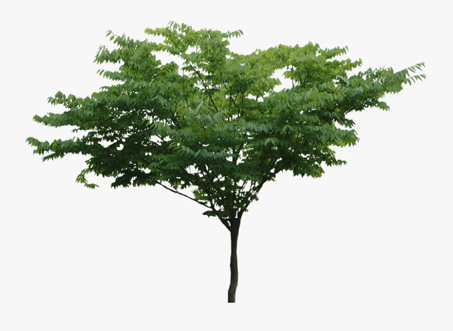 Trees Png Images - Transparent Background Tree View Png, Transparent Clipart