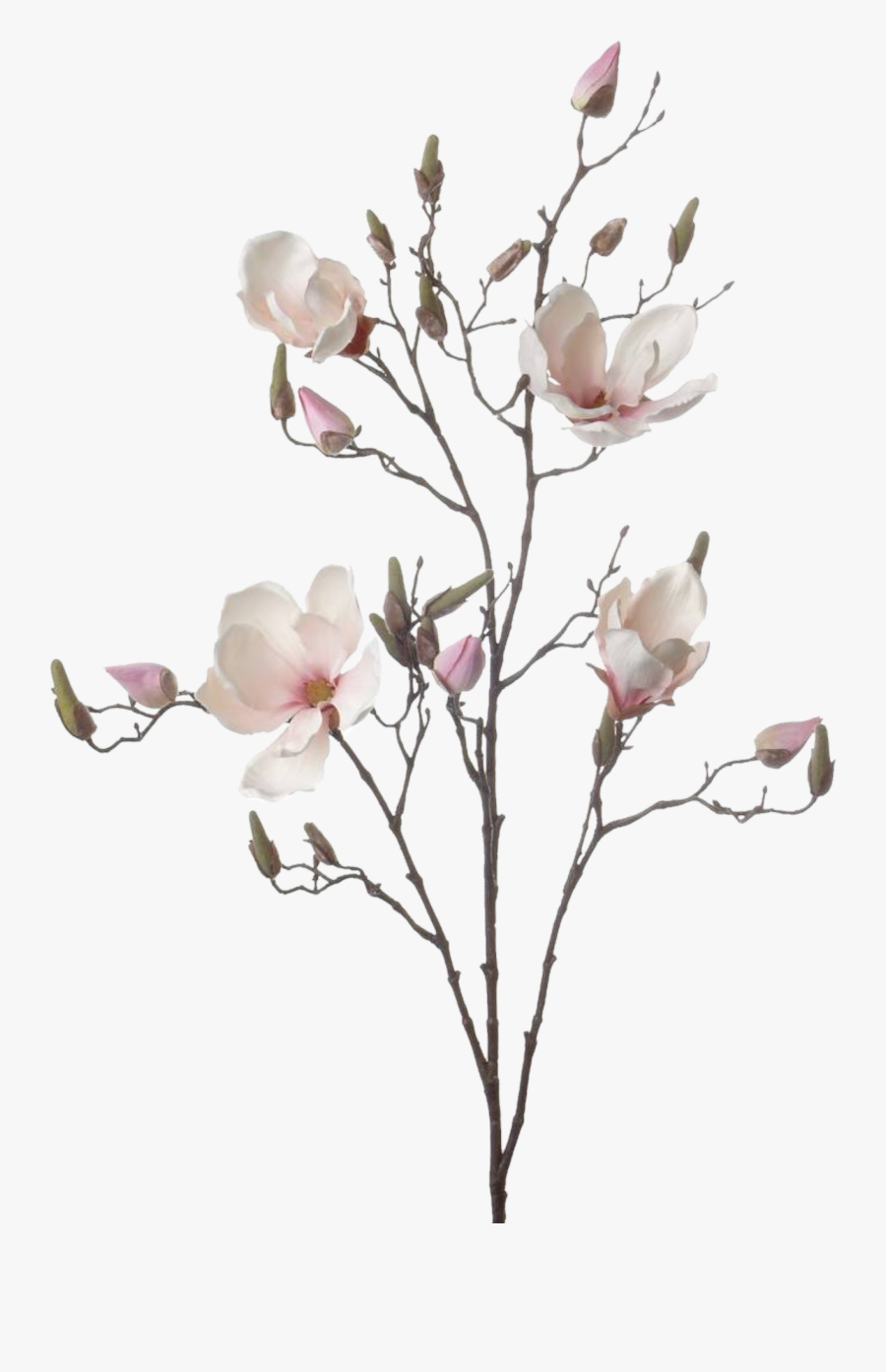 Flowers Branch Drawing, Transparent Clipart