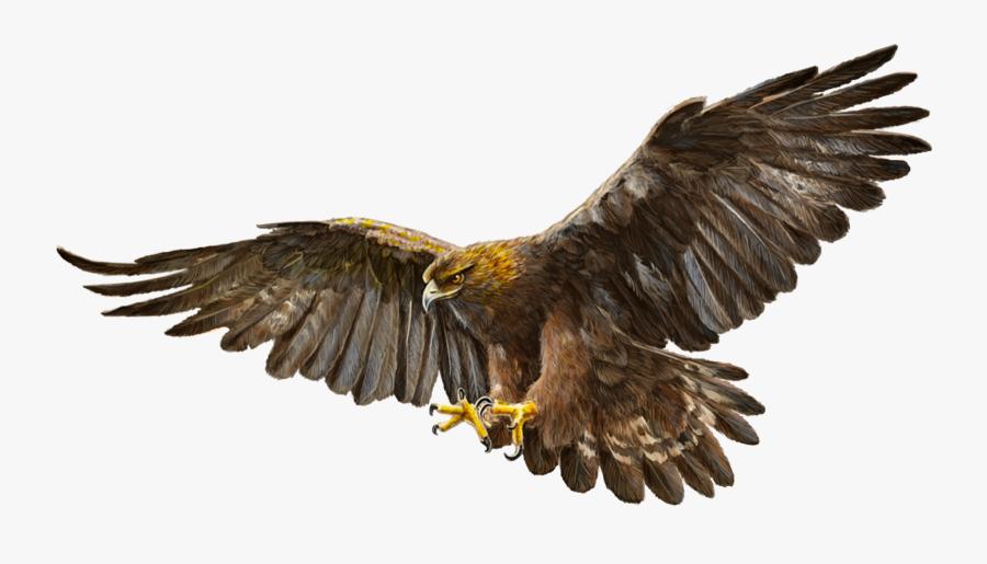 Bald Eagle Bird Golden Eagle - Golden Eagle White Background, Transparent Clipart
