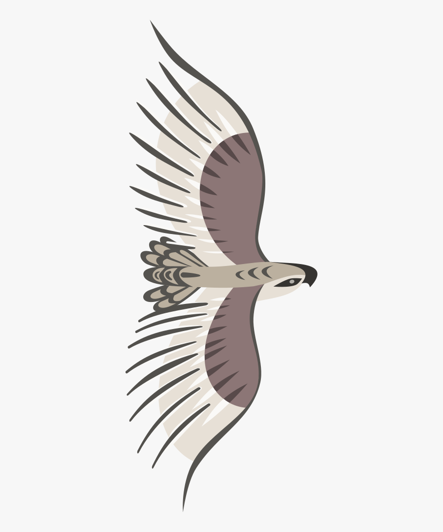 Golden Eagle - Flying Bird Top View Png, Transparent Clipart