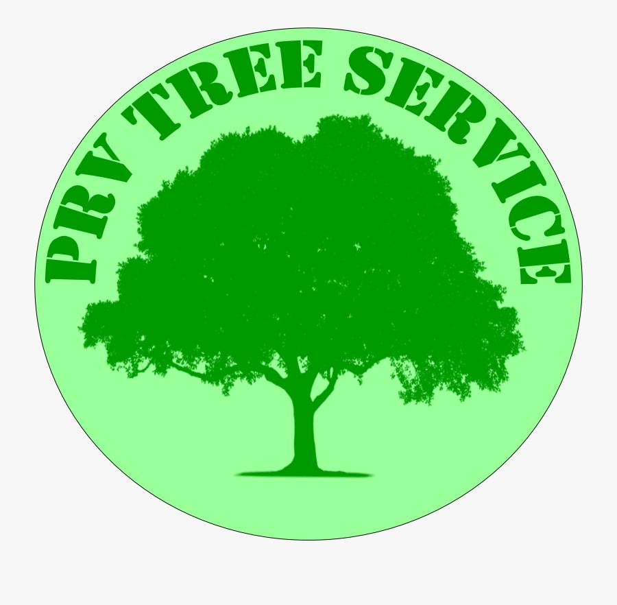 Roots Clipart Stump Grinding - Grove, Transparent Clipart