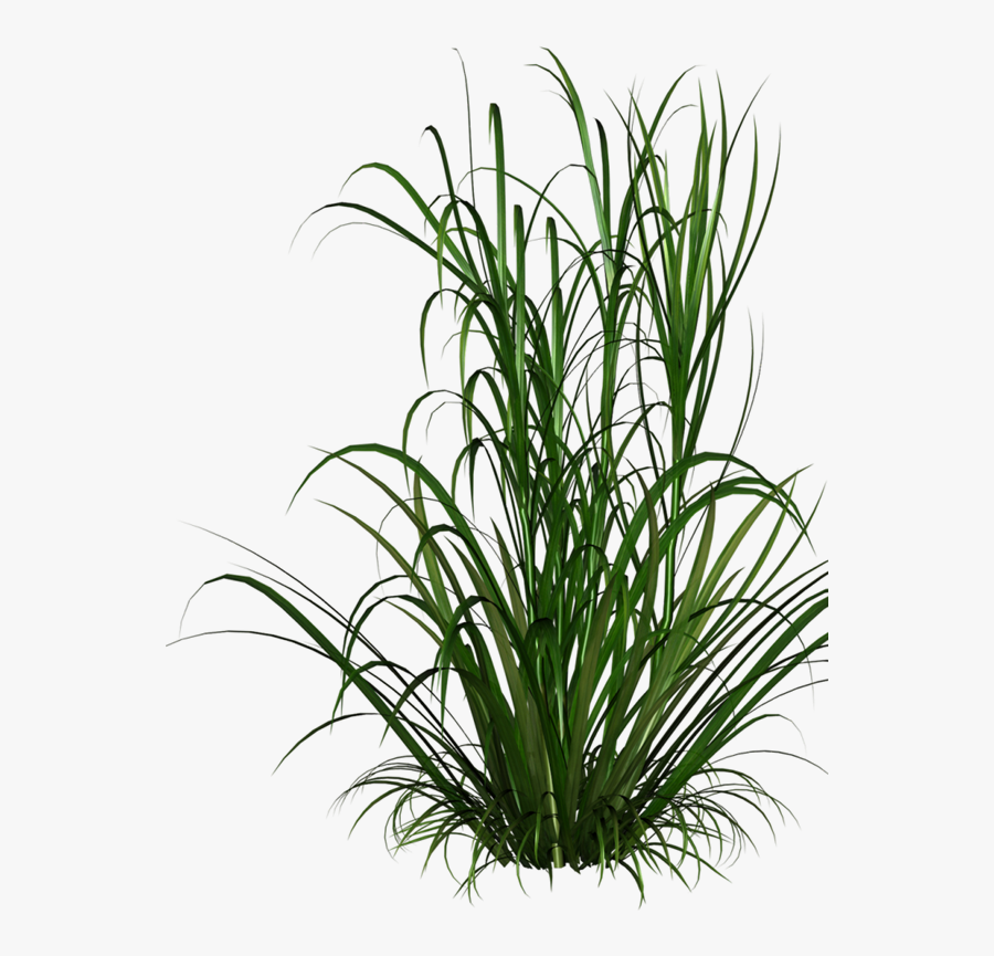 Grasses Grass Free Download Image Clipart - Tall Grass Texture Png, Transparent Clipart