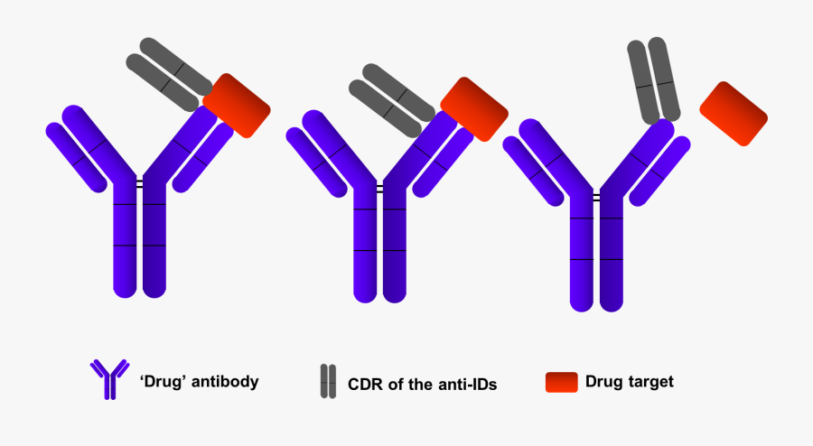 Anti Idiotypic Antibody, Transparent Clipart